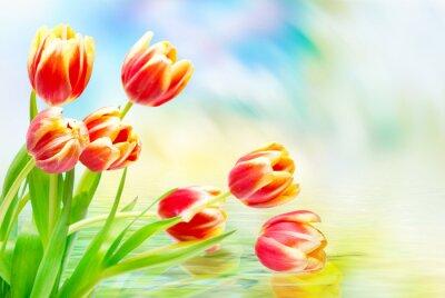 Bild Tulip Blumen Nahaufnahme