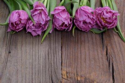 Bild Tulipany