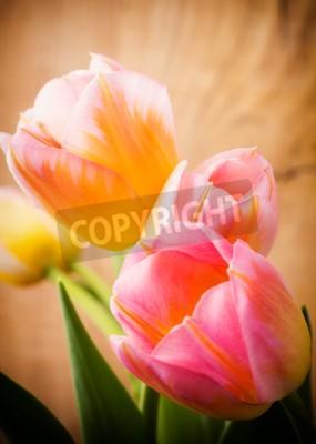 Bild Tulpen, Blumenhintergrund.