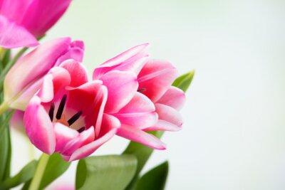 Bild Tulpenblüten