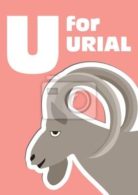 U für die Urial, ein Tier-Alphabet für Kinder