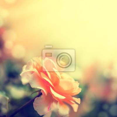 Unscharf Unschärfe Hintergrund mit Rose.