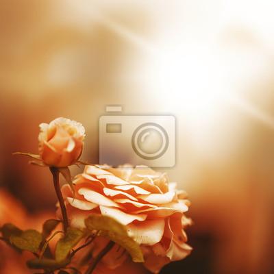Unscharf Unschärfe Hintergrund mit Rose
