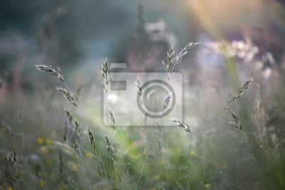 Unscharfe Morgen bunte Rasen Gras Hintergrund. Selektiver Fokus verwendet.