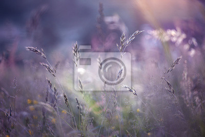 Unscharfe Morgen bunte Wiese Gras Hintergrund. Magenta Farbton und selektiven Fokus verwendet.