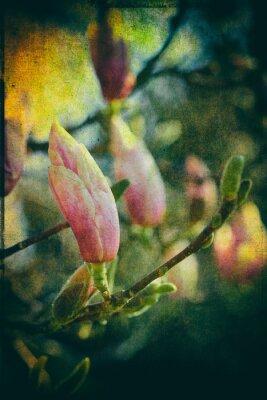 Bild Untertasse Magnolia mit künstlerischer Nachbearbeitung