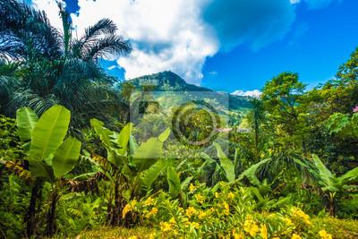 Bild Üppige Urwälder, Ranomafana (heißes Wasser in Madagaskar) Nationalpark, Madagaskar