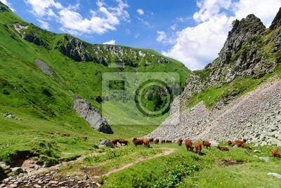 Vaches en liberté dans le Val de courre, Auvergne, Frankreich