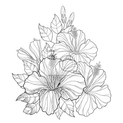 Vector blumenstrauß mit chinesischen hibiscus oder hibiscus rosa ...