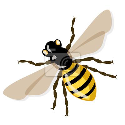 Vector Honigbiene, Illustration