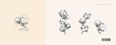 Bild Vector illustration cotton branch - vintage engraved style. Logo composition in retro botanical style.