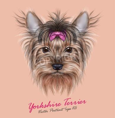 Bild Vector Porträt eines Haushundes. Netter Kopf von Yorkshire Terrier auf ping Hintergrund.