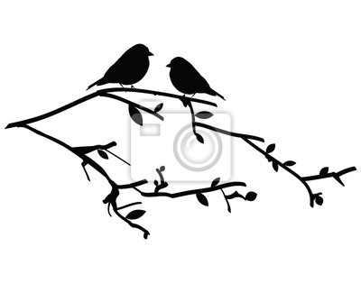vogel bild: bilder vogel auf ast