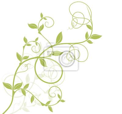 Bild Vektor Reben Kurve - haben - grünen Stiel Typ auf weißem Hintergrund