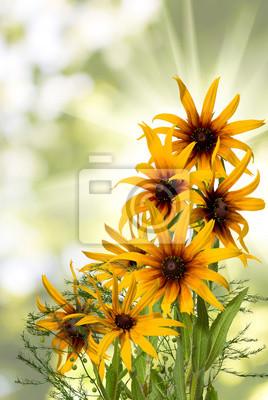 Verschiedene Schöne Blumen Im Garten Nahaufnahme Leinwandbilder