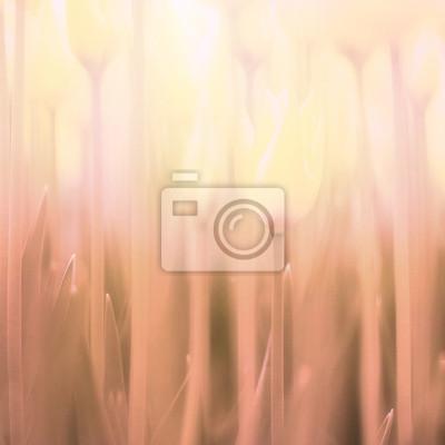 Verschwommen Hintergrund Tulpen