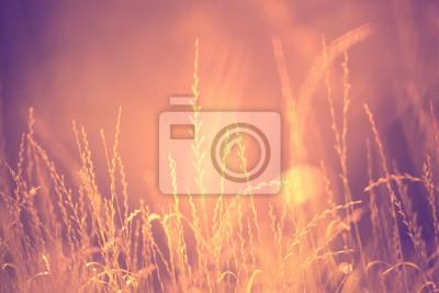 Verschwommen sonnigen goldenen roten Farbe abstrakte Wiese Kopie Raum Hintergrund. Geringe Tiefenschärfe verwendet.