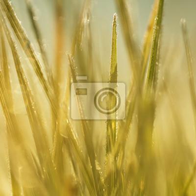 Verschwommene Herbst gefrorene Gras