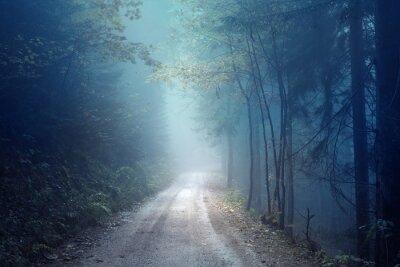 Verträumter Abend Herbst Farbe nebligen Wald Straße. Scary dunkelblau grün gefärbte Landschaft Waldland.