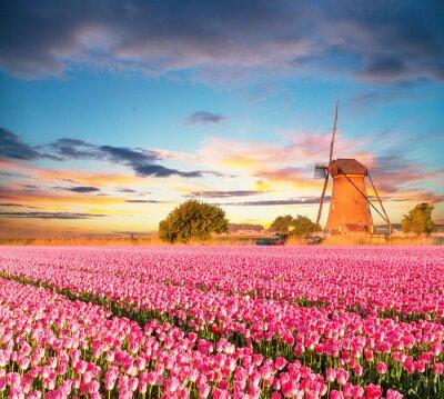 Bild Vibrant Tulpen Feld mit niederländischen Windmühle