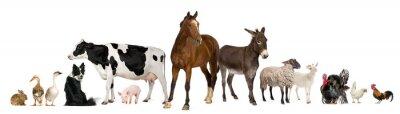 Bild Vielfalt von Nutztieren vor weißem Hintergrund