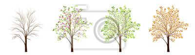 Bild Vier Jahreszeiten des Baumvektors