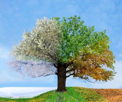 Bild Vier Saison Baum