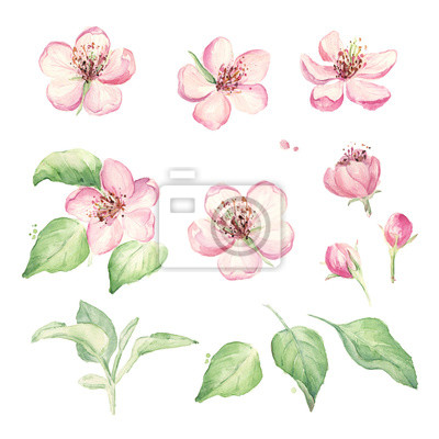Vintage Blumen Gesetzt Hochzeit Blumen Elemente Gesetzt Hand