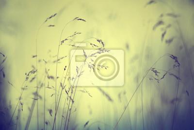 Vintage gelb blau verwischt Gras Wiese Hintergrund. Geringe Tiefenschärfe verwendet.