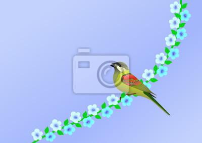 Bild Vogel