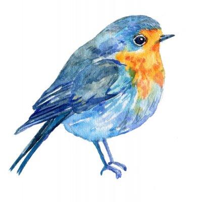 Bild Vogel auf einem weißen Hintergrund .illustration Aquarell