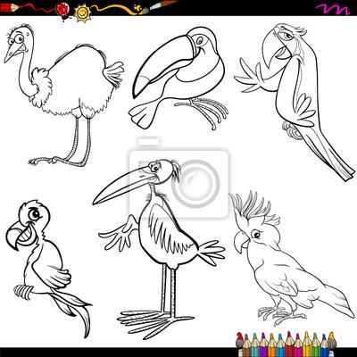 Vögel cartoon malvorlagen leinwandbilder • bilder Kakadu, Strauß ...