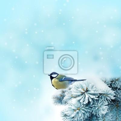 Bild Vogel (Kohlmeise) in der Winterzeit