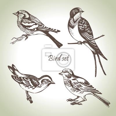 Vogel-Set, von Hand gezeichnete Illustration