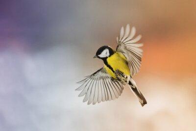 Bild Vogel Vogel fliegen Strecke deine Flügel in den Himmel bei Sonnenuntergang