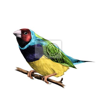 Charmant Rote Böse Vogel Färbung Seite Ideen - Beispiel Anschreiben ...