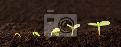 Bild Wachsende Pflanze Sequenz im Schmutz - ein Sämling wächst schrittweise größer in Schmutz - Metapher für Erfolg oder Wachstum