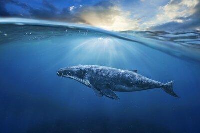 Bild Wal in halber Luft