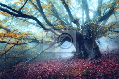 Wald im Nebel. Alte magische Baum mit großen Ästen und gelben Blättern. Mystischer Herbstwald im blauen Nebel. Alter Baum. Schöne bunte Landschaft mit Herbst Holz. Natur Hintergrund. Nebeliger Wald.
