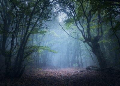 Wald im Nebel. Enchanted Herbst Wald im Nebel in den Morgen. Alter Baum. Schöne Landschaft mit Bäumen, bunte grüne Blätter und blauer Nebel. Natur Hintergrund. Dunkle Nebelwald mit magischer Atmosphär