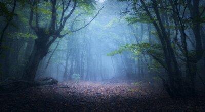 Wald im Nebel. Herbstwälder. Alter Baum. Natur Hintergrund.