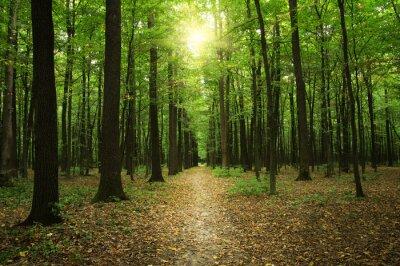 Bild Wald mit Sonnenlicht