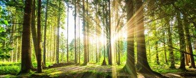 Bild Wald Panorama mit Sonnenstrahlen