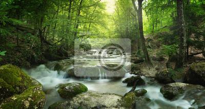 Bild Wald Wasserfall