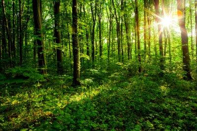Bild Waldbäume
