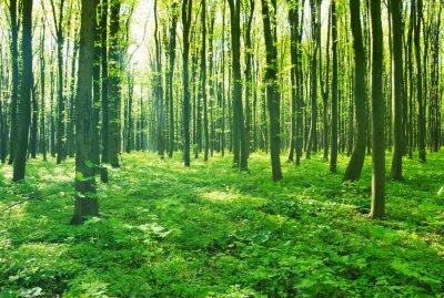 Bild Waldgrün