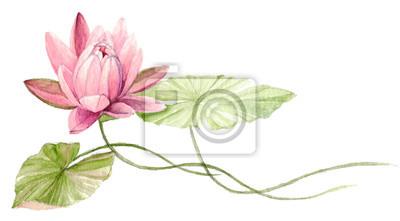 Wasser Lilie Oder Lotus Blume Auf Dem Wasser Fuchsia Hand