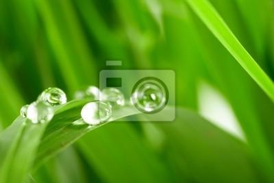 Bild Wassertropfen auf dem grünen Rasen