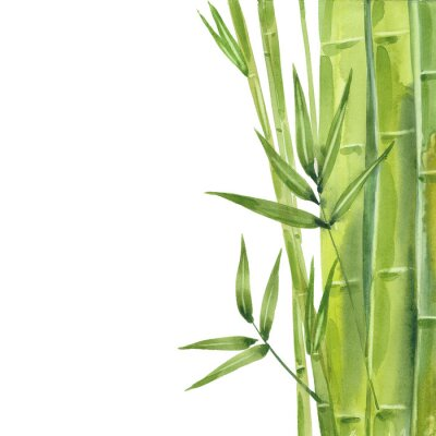 Bild watercolor bamboo stalks