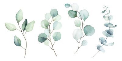 Bild Watercolor floral illustration set - green leaf branches collection, for wedding stationary, greetings, wallpapers, fashion, background. Eucalyptus, olive, green leaves, etc.